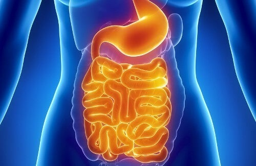 What Can You Eat to Restore Gut Flora?