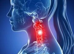 Cervical-vertebrae-500x325