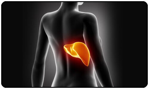 Clean Your Liver Naturally: Lear How Here!