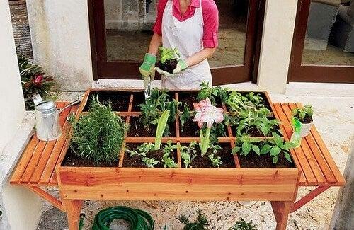 How to Set up an Urban Organic Vegetable Garden