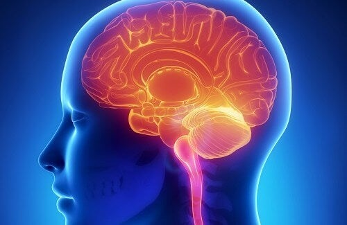 Multiple sclerosis affects the brain