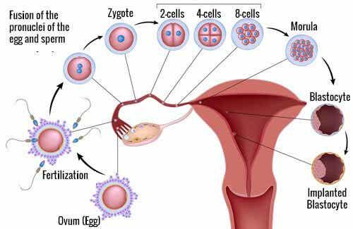9 Foods that Help Improve Fertility
