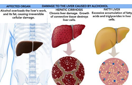 The Effects of Alcohol in the Body