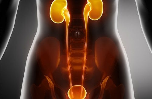 How to Care for Your Kidneys and Bladder