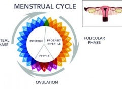 MENSTRUATION copy