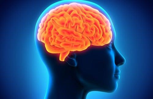 Foods to Strengthen Memory
