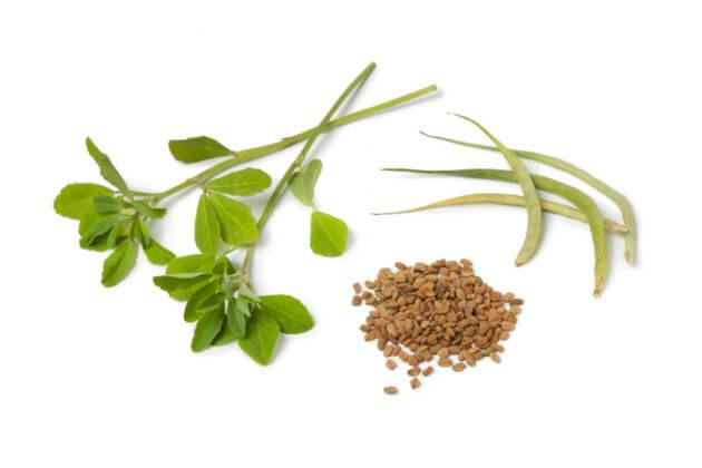 fenugreek weight gain