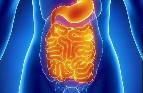 Ideal Foods to Cleanse The Intestines
