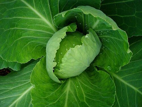 prohibited vegetables por ulcers:flatulent vegetables