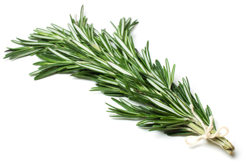 Rosemary is used for all kinds of pain, in the muscles, back, hips, bones, due to injury, rheumatism, and joint inflammation.