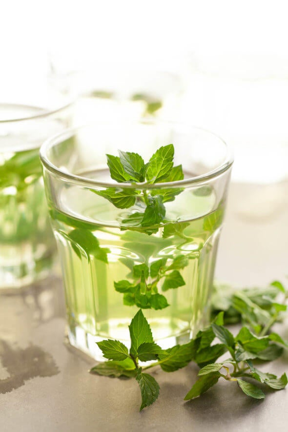 Fresh mint tea infusion