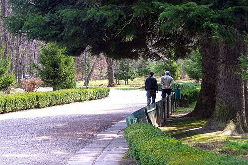 Elderly couple walking in a park greenery detect alzheimer's through the eyes