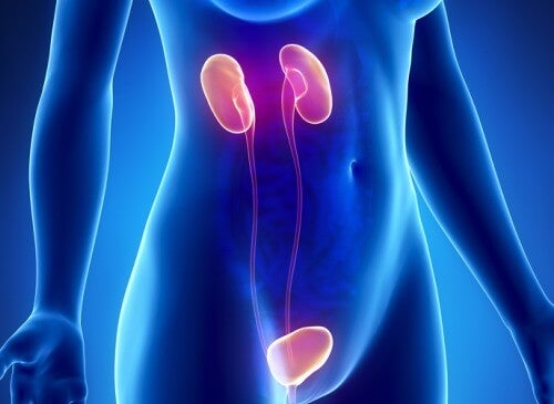 10 Symptoms of Kidney Failure and How to Prevent Them