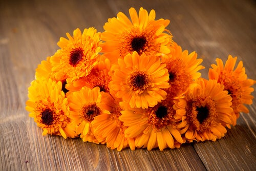 marigold flowers to treat and hide varicose veins