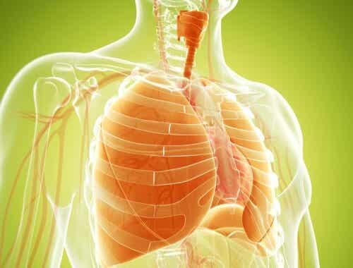 Natural Remedies to Strengthen the Lungs