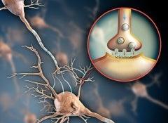 nervous-system1