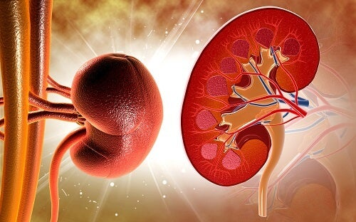 How to Detox Your Kidneys with Home Remedies