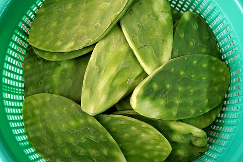Leaves of nopal