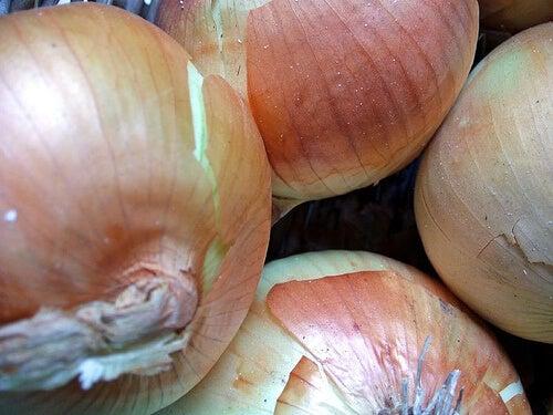 onion-7