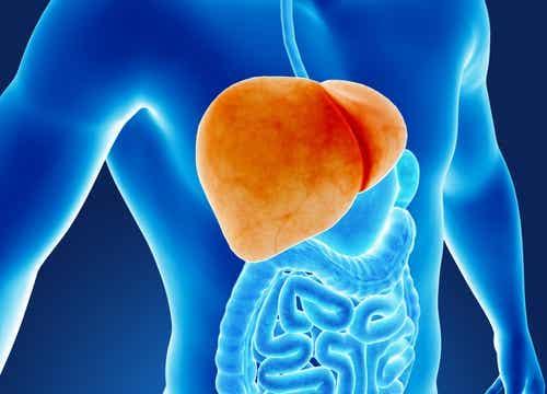 6 Habits that Damage Your Liver