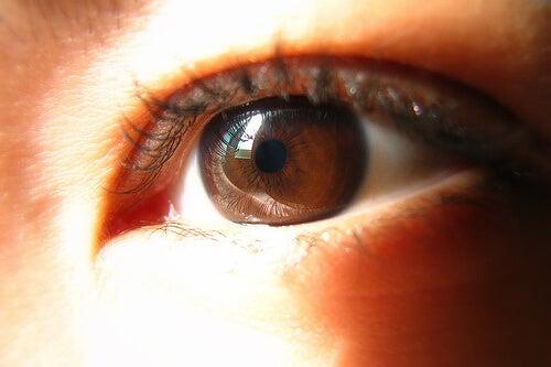 brown eye-starbooze
