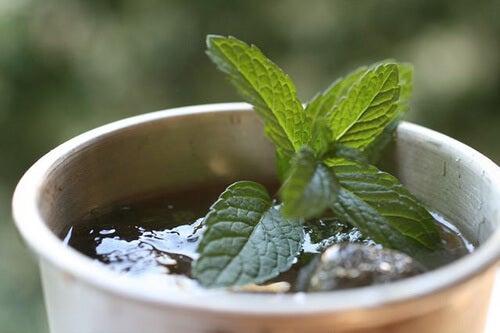 medicinal plants to relieve intestinal discomfort: green tea