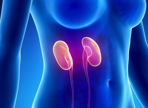 Tips for Cleansing Your Kidneys Naturally in a Week