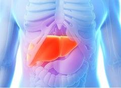 liver-2