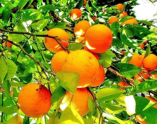 oranges-3