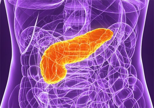 5 Tips for Taking Care of Your Pancreas