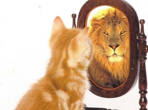 Cat imagining himself as lion