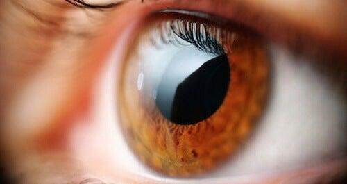 Exercises to Fight Eyestrain