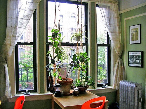 Cozy living space with window and plants