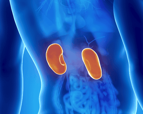Kidney Infections: Symptoms and Treatment
