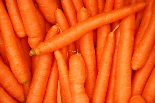 Several fresh carrots.