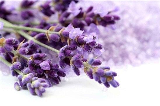 4 lavendar