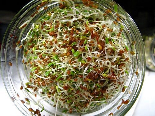 bowl-of-sprouts