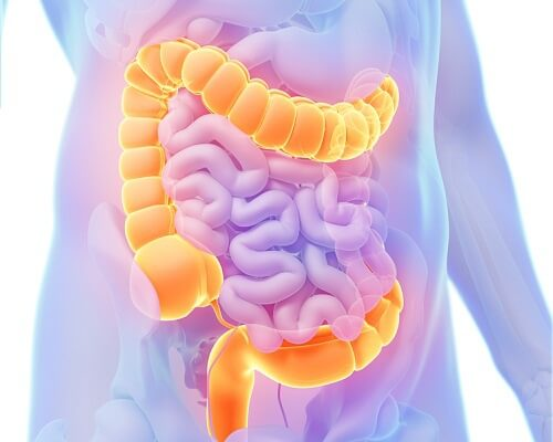 Care for Your Colon with Medicinal Herbs