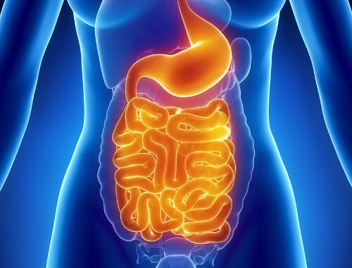 Diabetes affects the digestive system
