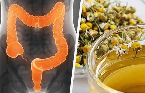 Cleanse Your Colon with Medicinal Herbs