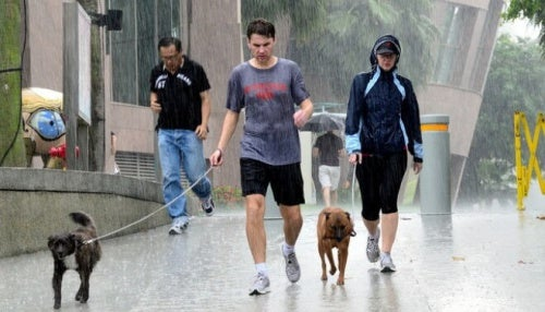 Walking dog in rain