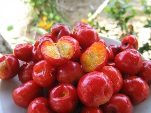 Barbados cherries