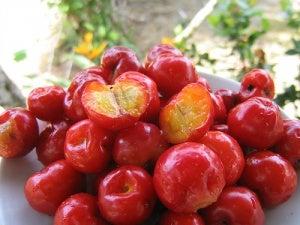barbados_cherry