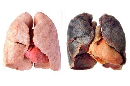 Tips for cleaner lungs step to health tips for cleaner lungs forumfinder Gallery