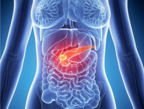 pancreas-2