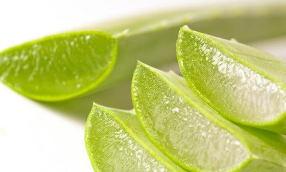 Aloe vera leaves cut open