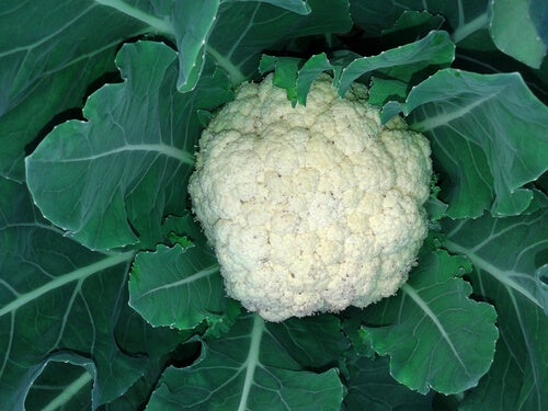 I_cauliflower