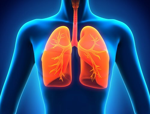 Lungs2