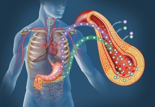 Pancreas diabetes