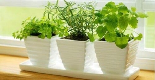 10 Plants that Attract Positive Energies